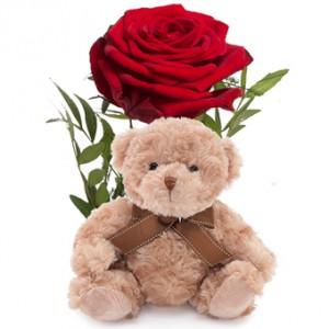 En ensam röd ros tillsammans med en söt liten nalle.