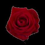 Röda långa rosor. Välj antal själv.