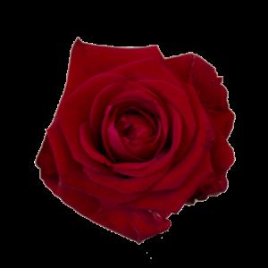 Röda rosor, långa. Finns hos Interflora (bestäm antal själv)