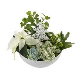 Juldekoration i vit skål, med vit julstjärna och gröna, blandade växter +vit juldekoration. Julgruppen utstrålar VINTER. Skicka blommorna med ett bud från Euroflorist och önska God Jul!