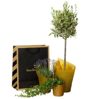 Presentpåse med olivträd, murgröna och lavendel (eller motsvarande). Skicka med ett Interflora-bud!